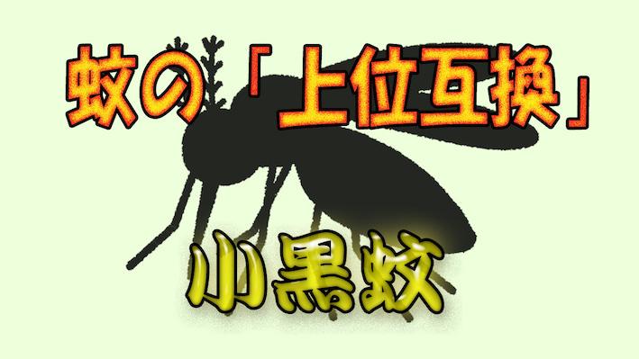 【蚊の上位互換】台湾のある虫に気を付けろ!【虫除けは必須】
