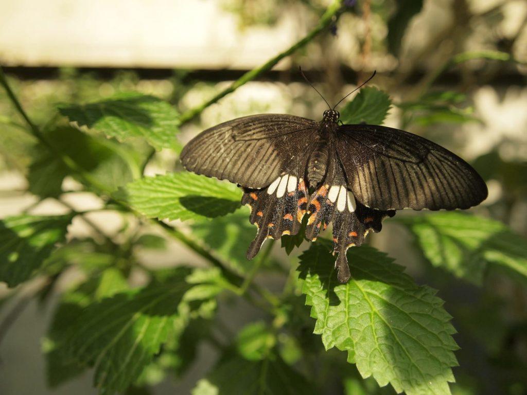【2020年】世界を救う!!昆虫食を扱う企業13選【日本と海外】