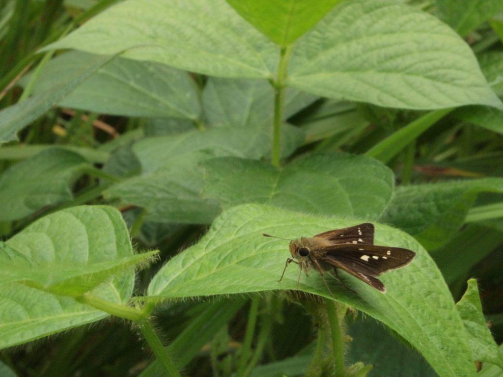 【食用昆虫】購入可能な食べられる(美味しい)昆虫まとめ【5選】