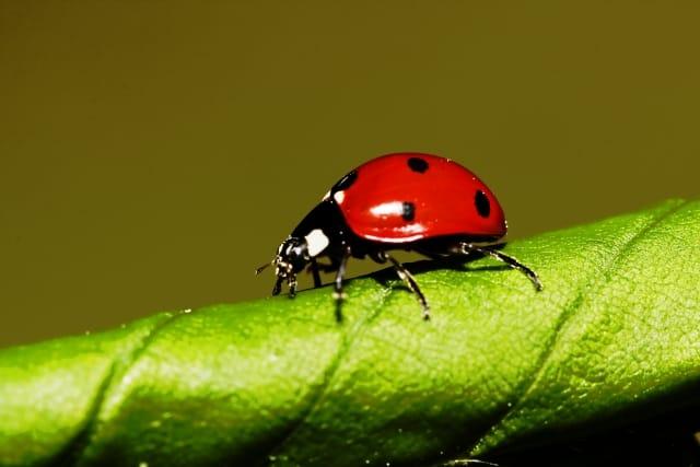 【昆虫好き必見】昆虫学が学べる大学はどこ??【徹底調査】