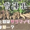 雪蓮果とは何か?見た目はサツマイモ、その味はなんと…|台湾フルーツ