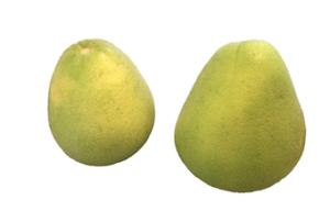 柚子/文旦:台湾フルーツ