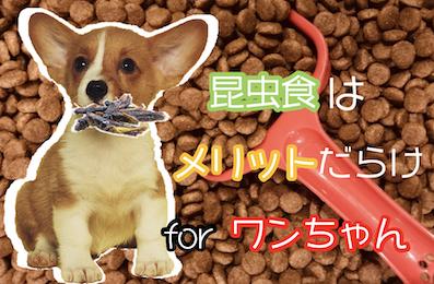 昆虫食は愛犬にもメリットだらけだった【ドッグフード業界に革命】